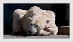 I´m not Knut !!!