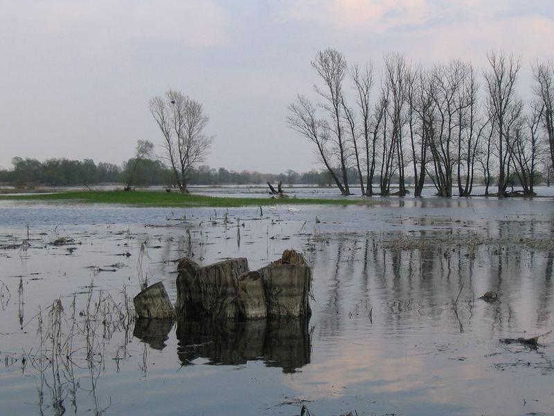 Im Oderbruch im Frühjahr 2005 - 01