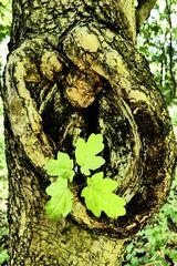 im Ohr eines Baumes