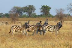 Im Okavango Delta