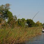 Im Okavango Delta...
