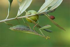 Im Olivenhain