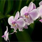 Im Orchideen-Dschungel