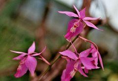 Im Orchideengarten_1