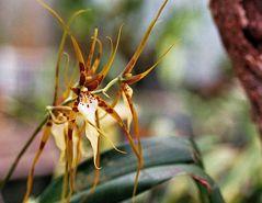 Im Orchideengarten_3