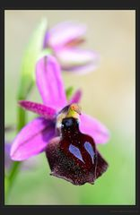 Im Orchideenparadies