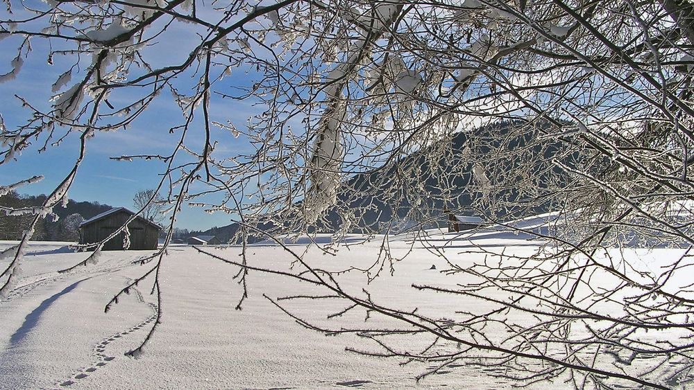 Im Osterzgebirge im 800m Höhenbereich liegt jetzt auch  fast 40 cm Schnee...