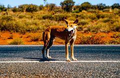 Im Outback getroffen