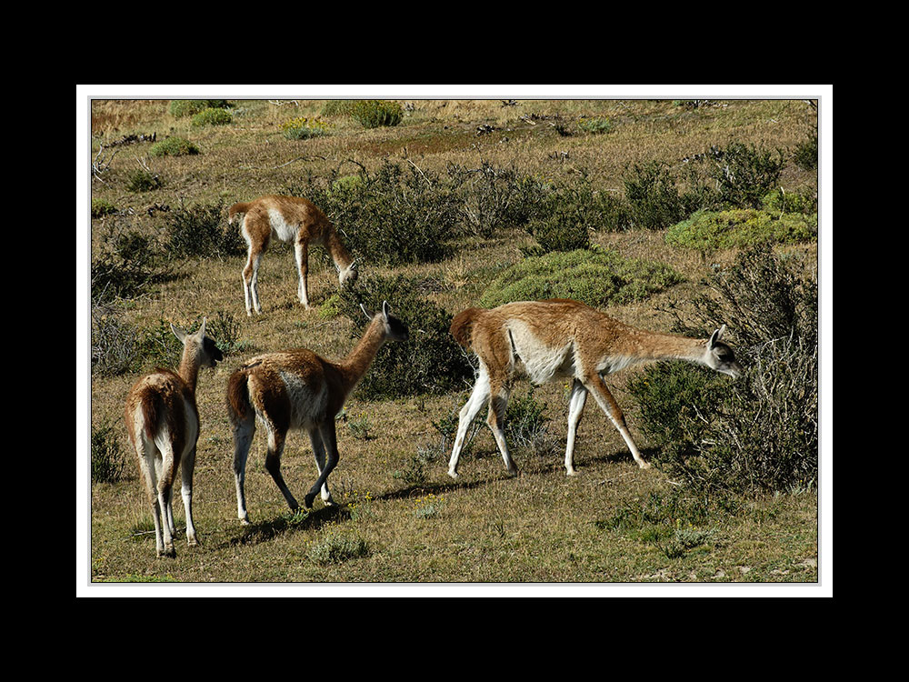 Im Paine Nationalpark 03