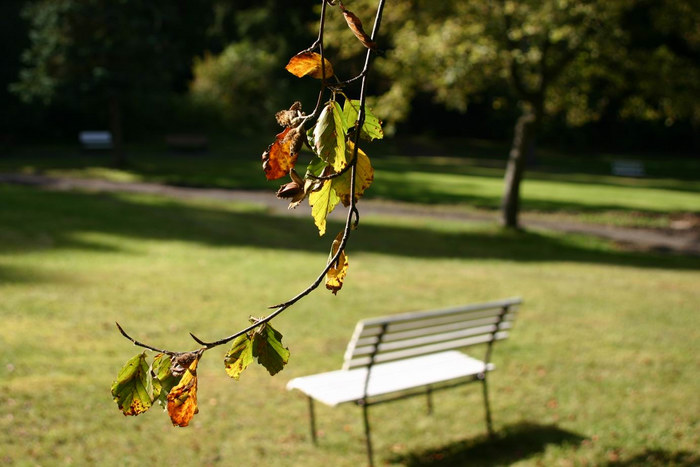 Im Park II