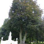 Im Park Sanssouci, Potsdam