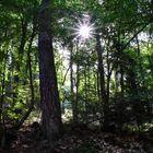 Im Pfälzer Wald