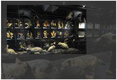 Im Profil-Museum