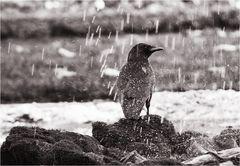 Im Regen stehen...