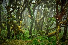 Im Regenwald 1
