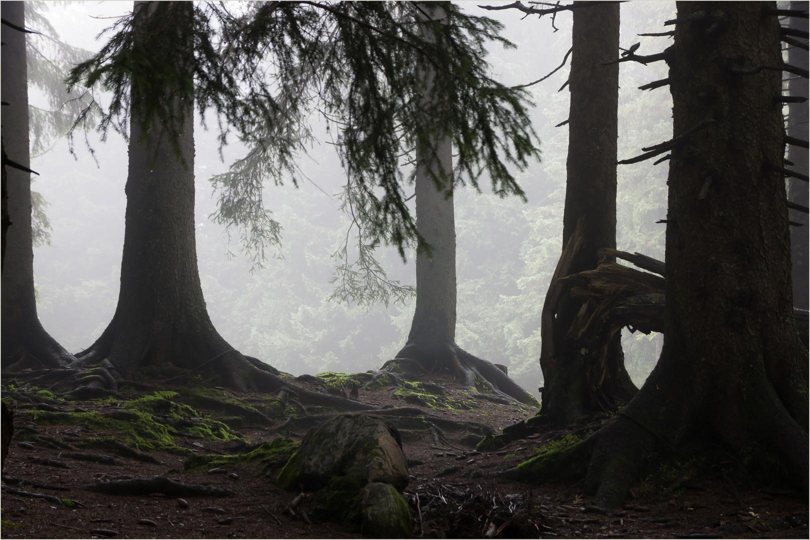 """Im """"Regenwald"""""""