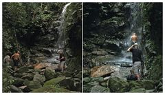 im Regenwald