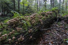 Im Regenwald...