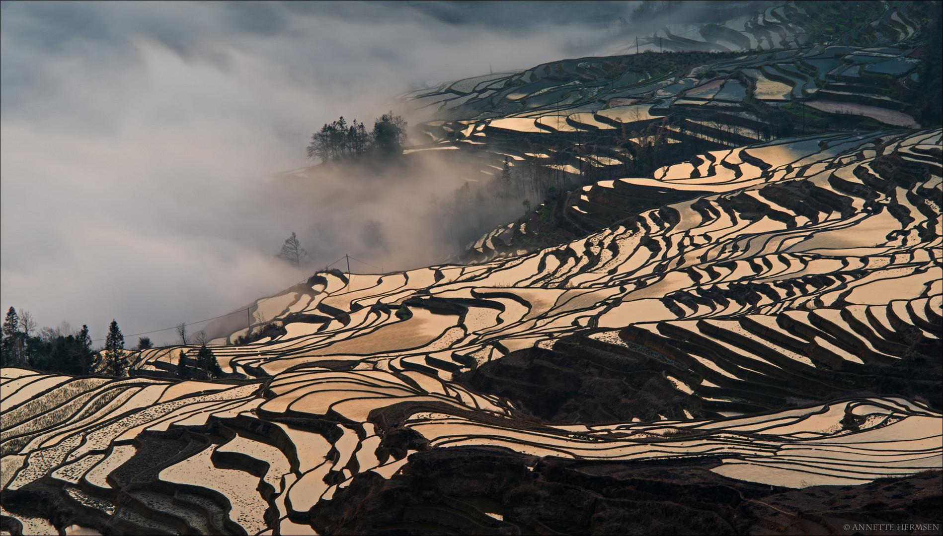 Im Reich der Mitte [16] - Morgennebel in den Reisfeldern