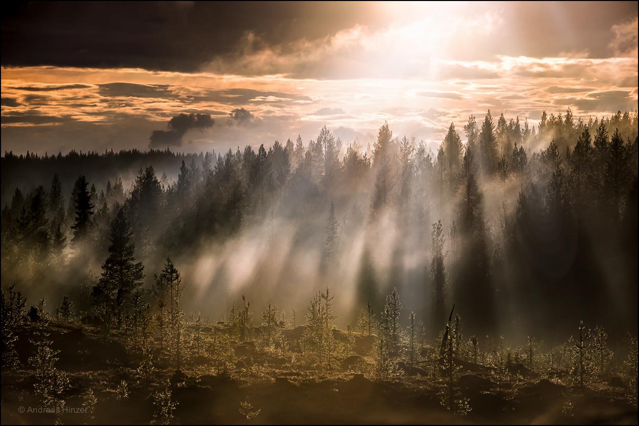 Im Reich der Waldgeister ....