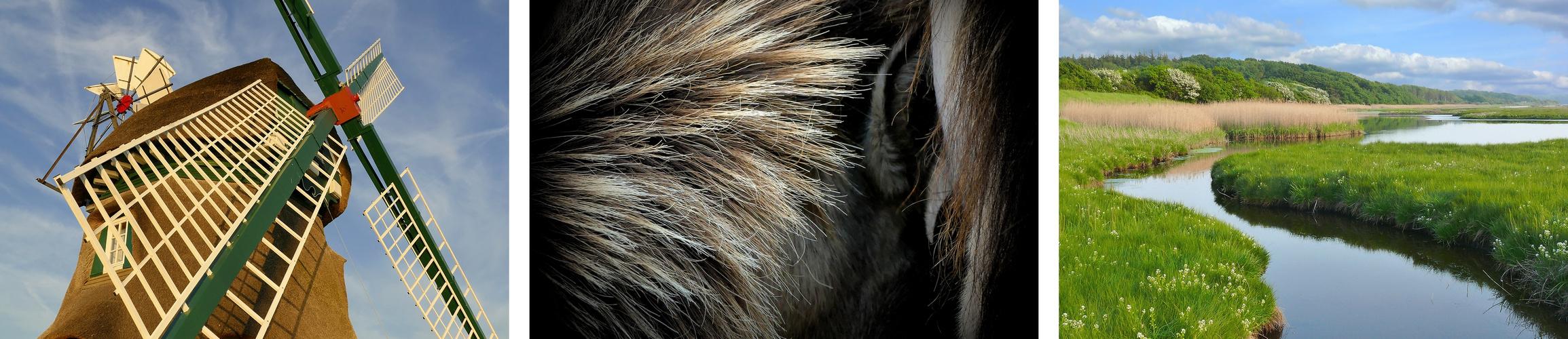 Im Reich der Wildpferde und Wasservögel – die Geltinger Birk