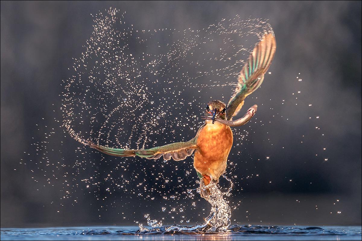 im Revier des Eisvogels