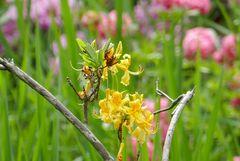 Im Rhododendronpark