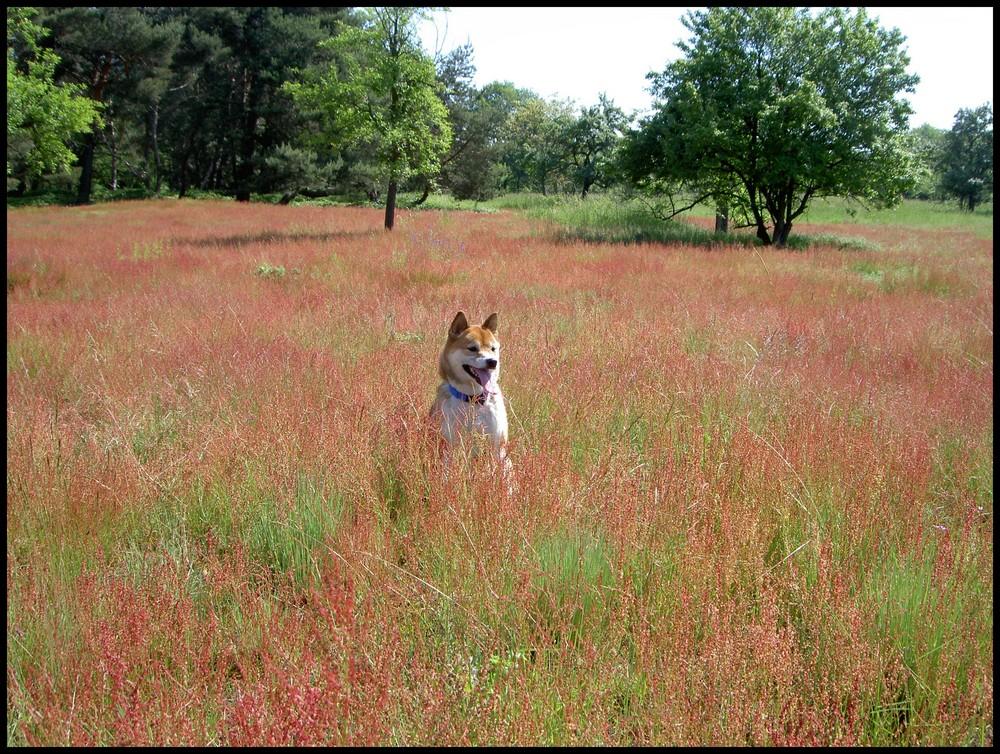 Im roten Feld