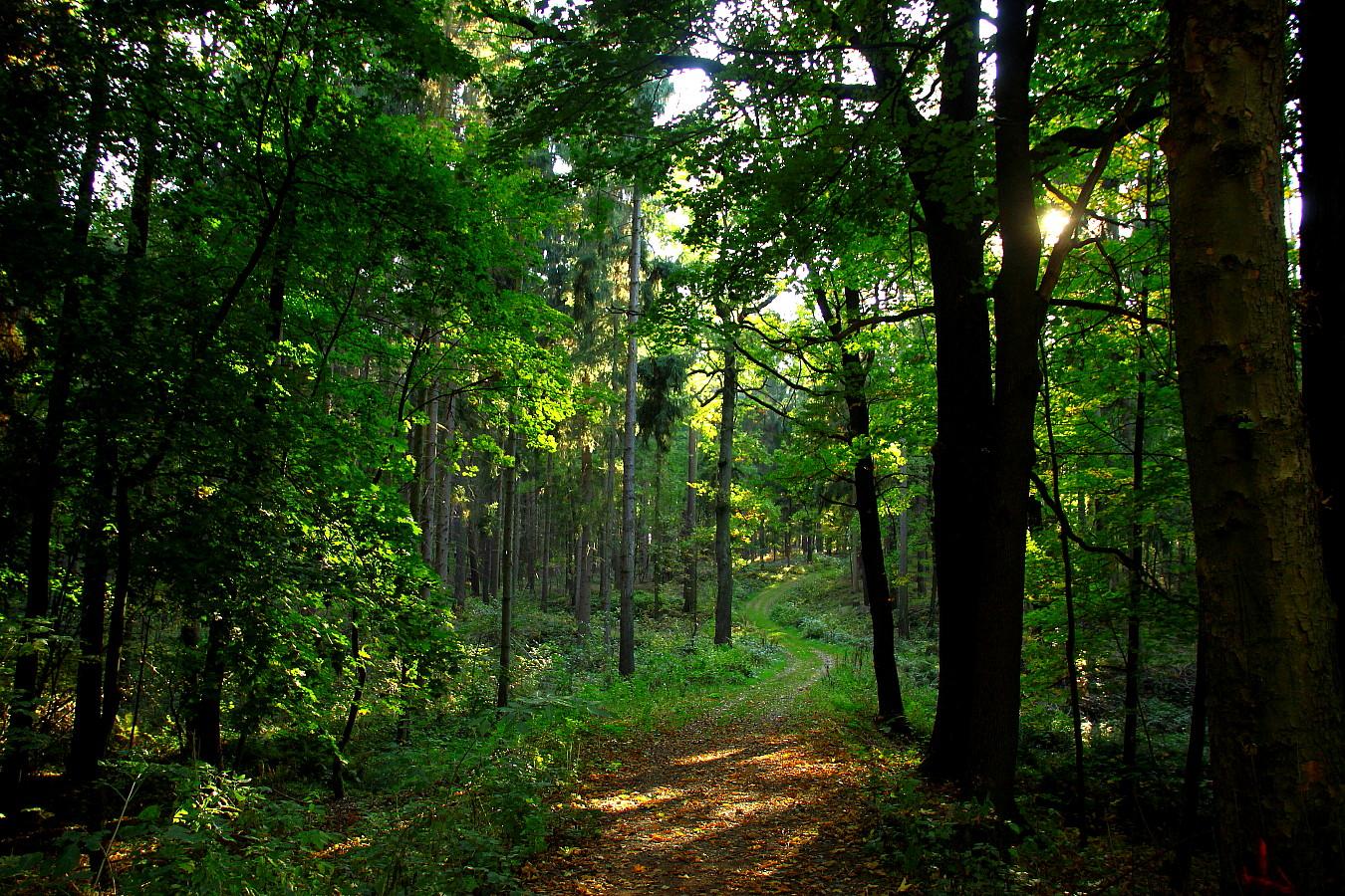 Im Rümpfwald