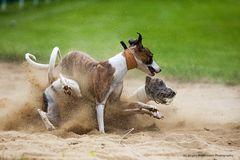 Im Sand gelandet