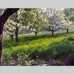 Im Schatten der Apfelblüten