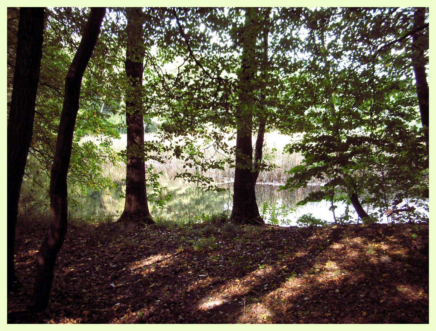 Im Schatten der Bäume