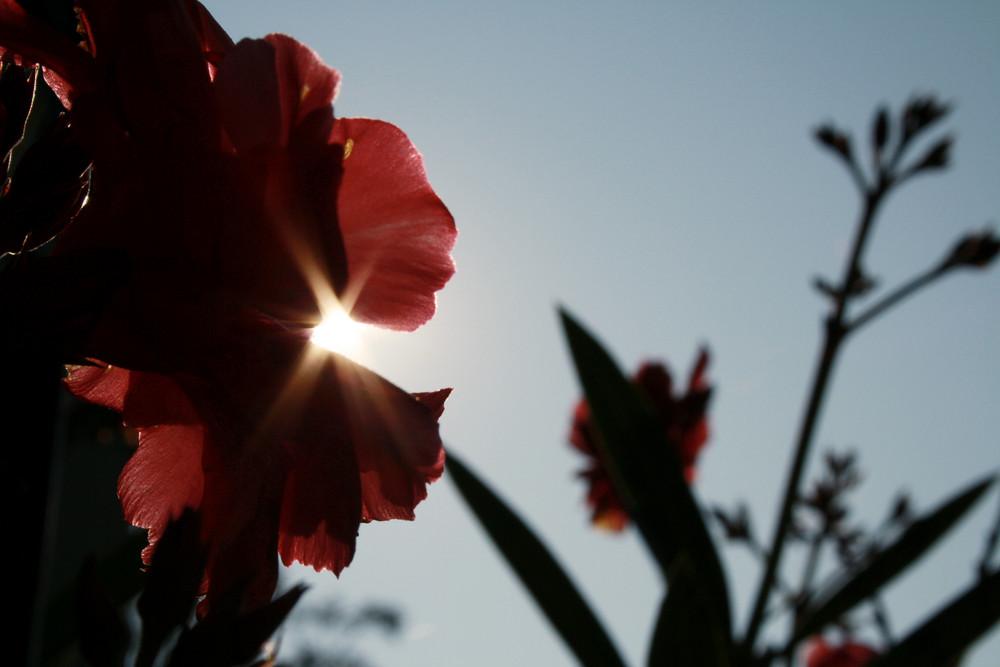 Im Schatten der Blume
