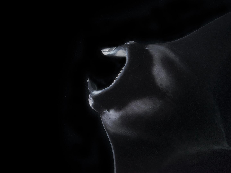 Im Schatten der Nacht...