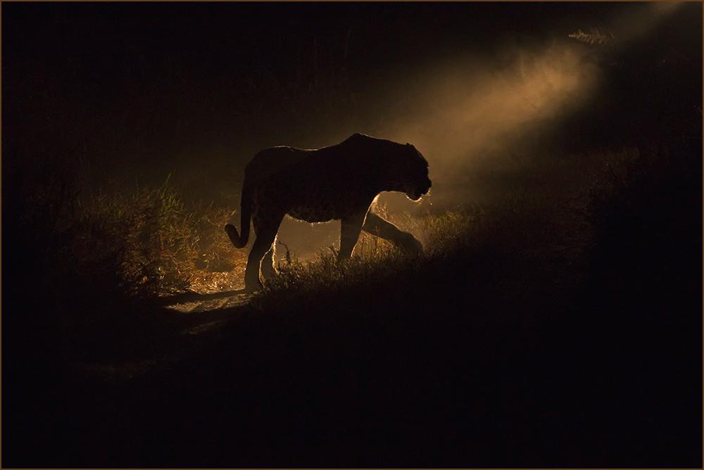 Im Scheinwerferlicht