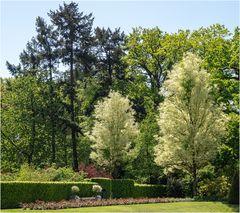 Im Schlosspark Arcen (5)