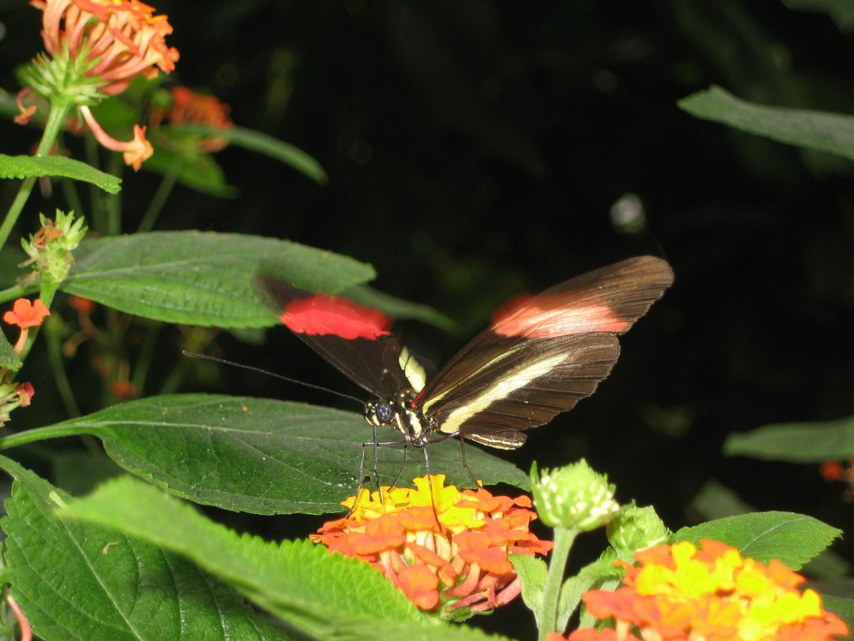 Im Schmetterlings Haus am Bodensee