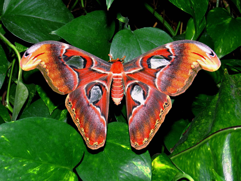Im Schmetterlings-Haus auf Insel Mainau