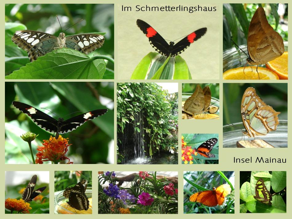 Im Schmetterlings- Haus
