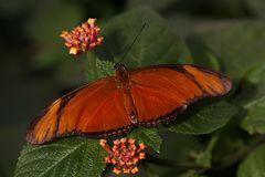 Im Schmetterlingshaus 1