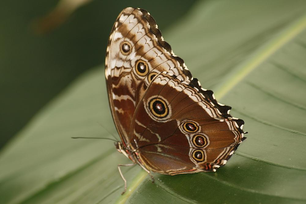 Im Schmetterlingshaus...