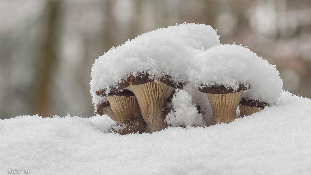 Im Schnee - Jucheee