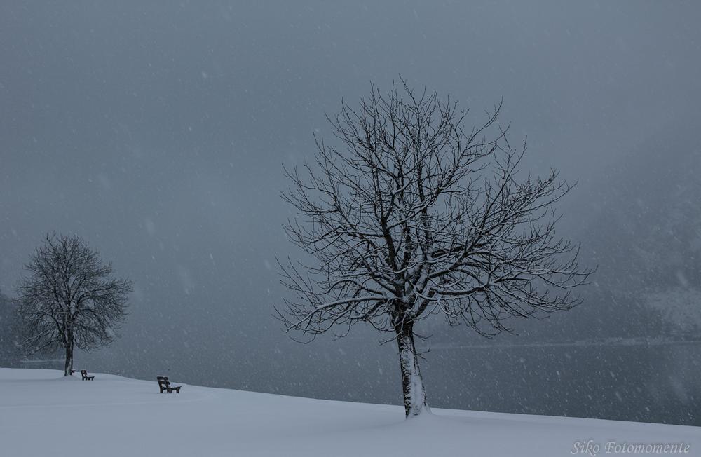 im Schneetreiben
