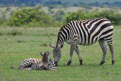 Im Schutz der Mutter
