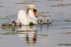 Im Schutz der Mutter...