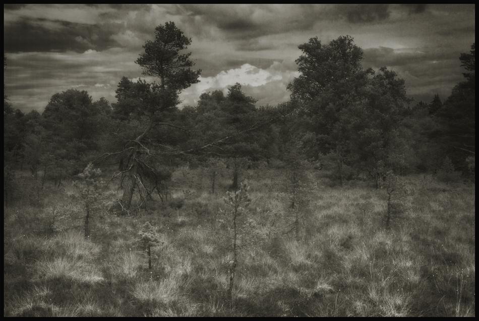 ...im schwarzen Moor...
