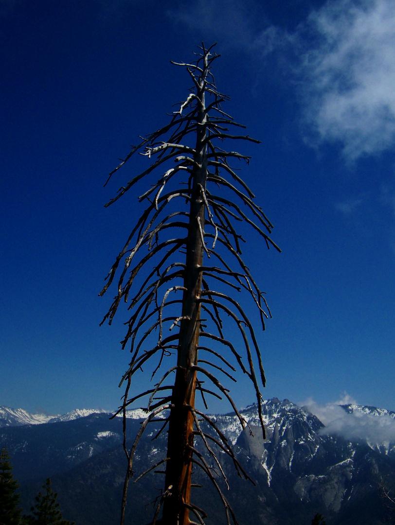 im Sequoia National Park