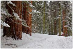 Im Sequoia NP ..