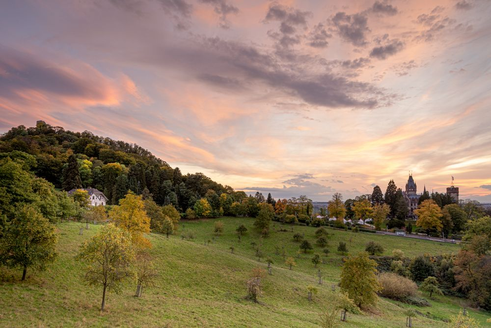 Im Siebengebirge...