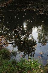 im Spiegel des glasklaren Waldsees